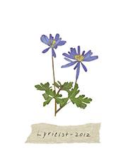 image of The Lyricist 2012
