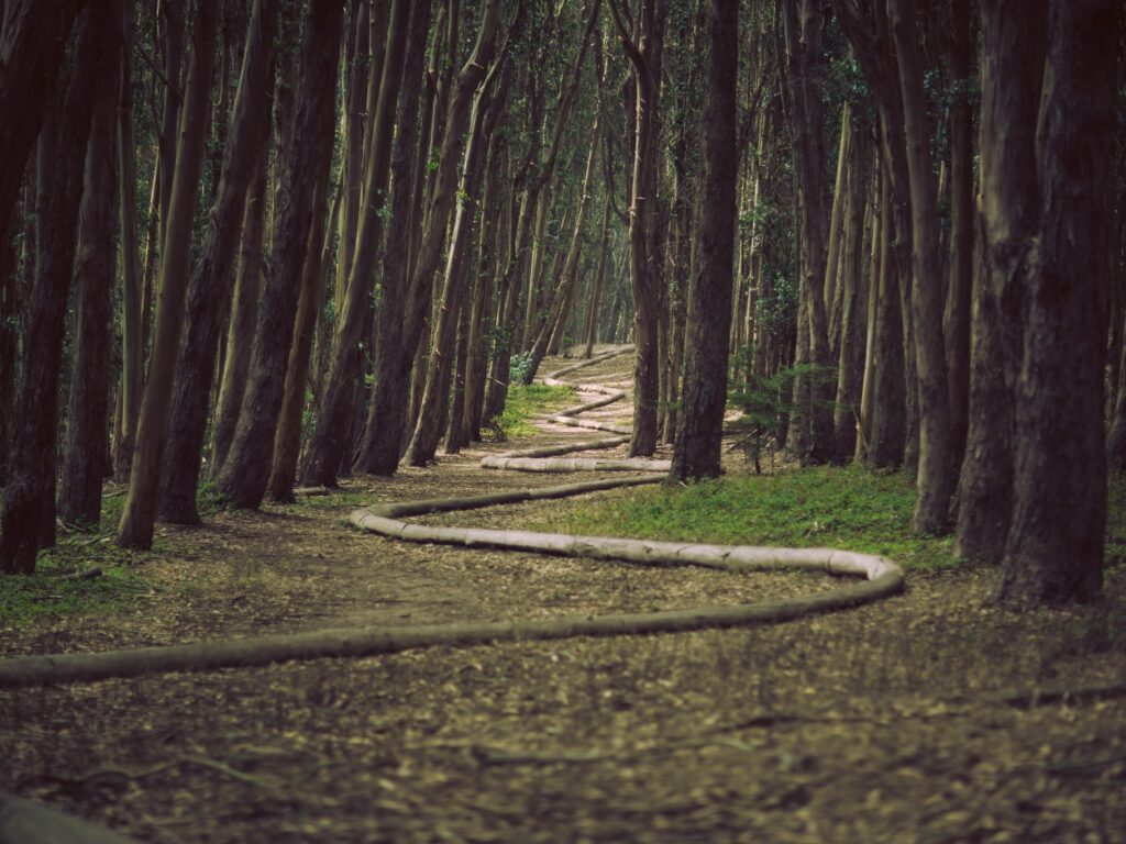 path in the forest with curving rope