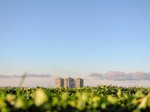 A Field with three skyscrapers in the back