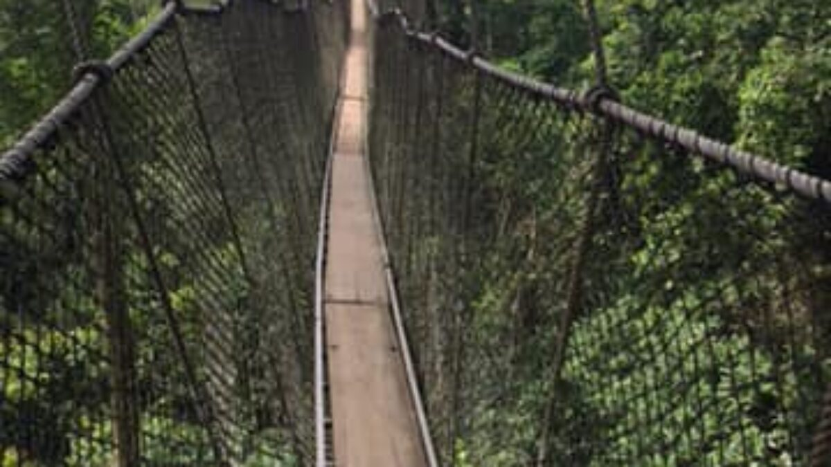 Photo of the famous canopy walk, the longest and tallest in Africa at over a quarter mile long and about 160 feet high