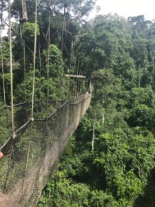 Photo of suspended footbridge over rainforest in Ghana.